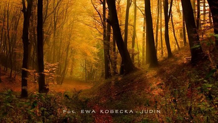 Ewa Kosecka-Judin