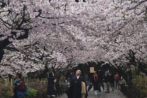 Japonia_700x1000_plakatweb